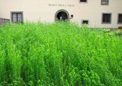 Le pianticelle crescono - foto Pietro Gritti - www.museo della Valle - www.pieroweb.com