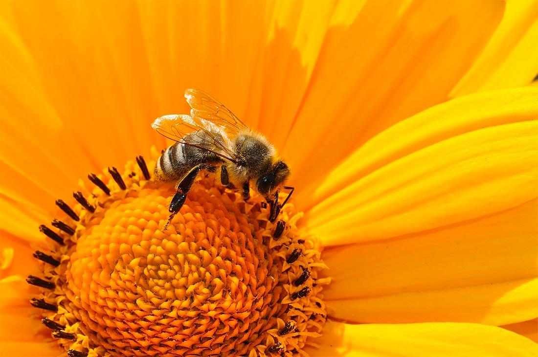 Sapori & Cultura 2014 - MGM Natura - Apicoltura e Miele